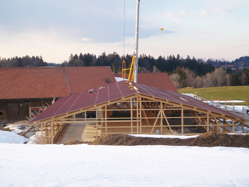 Neubau Steildach Viehstall Au